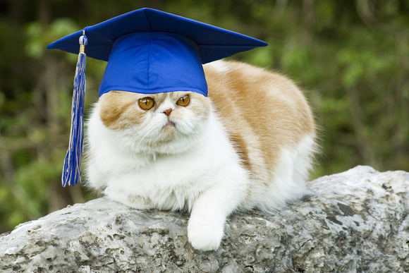 cat_in_graduation_cap-100038005-gallery